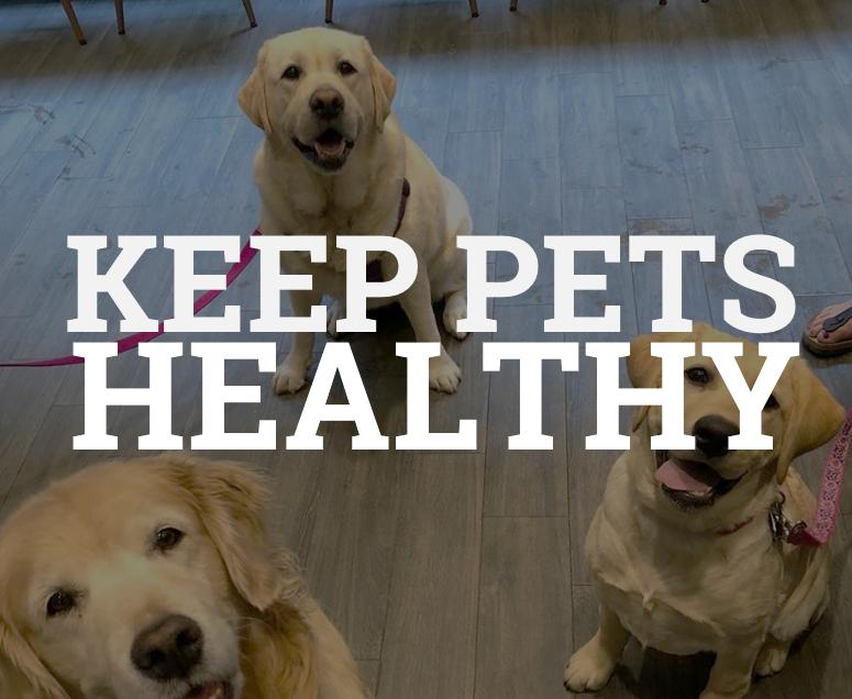 Liberty Village Animal Hospital tips for pet health