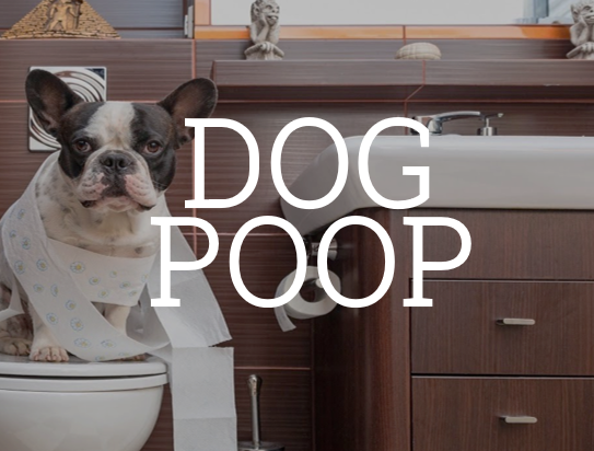 What you should know about dog poop
