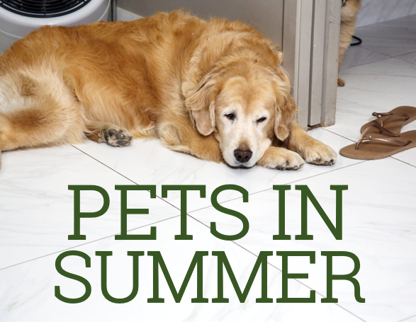 Dr Ellen Kinzl on how to keep pets safe in summer