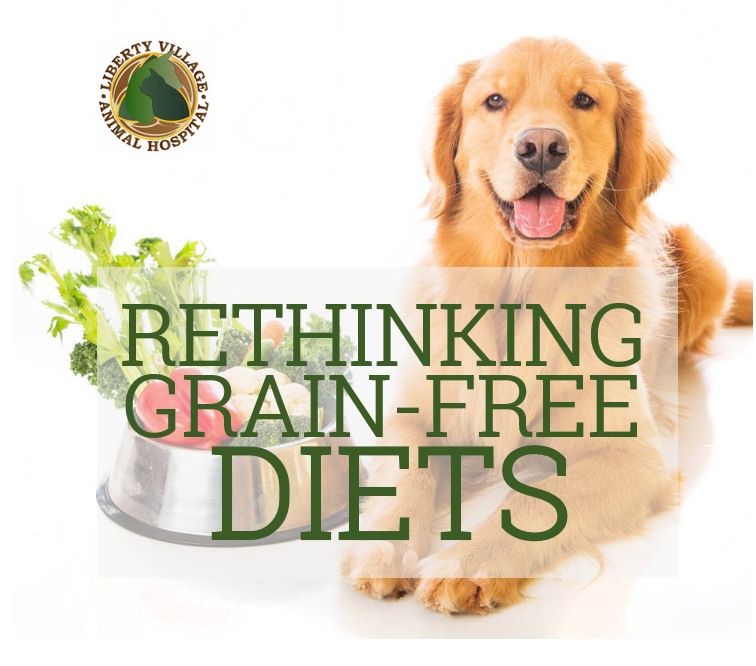 Grain free diets linked to heart disease in dogs