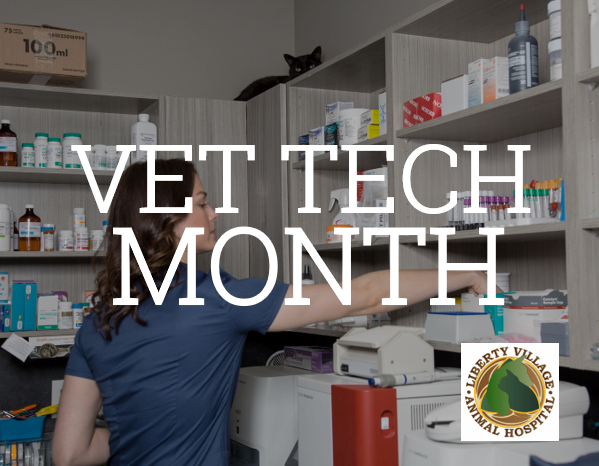 October 2019 is national vet tech month RVT