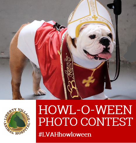 Veterinarian pet costume contest