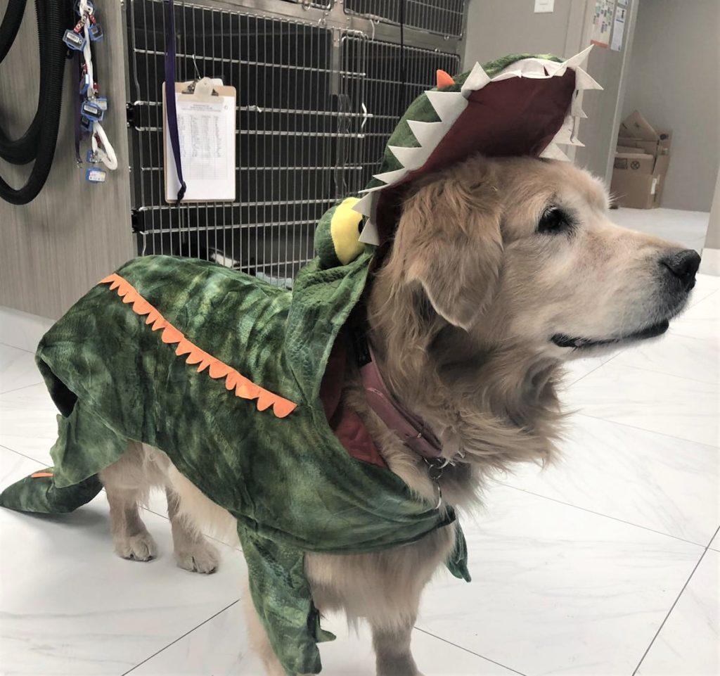 LVAH Howloween pet costume contest