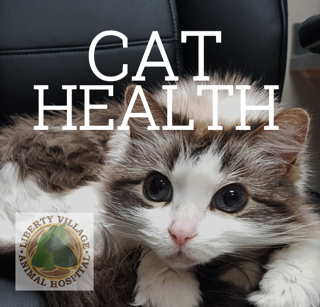 Older cat health