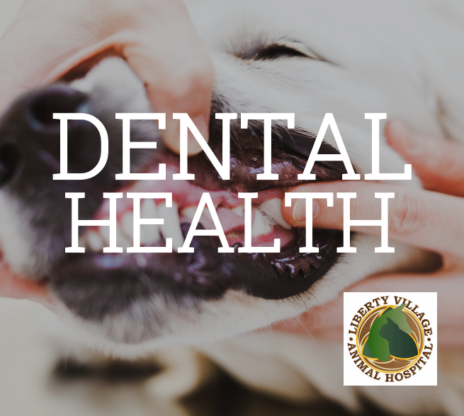 Liberty Village Animal Hospital dental health