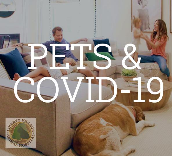Coronavirus and veterinary treatment