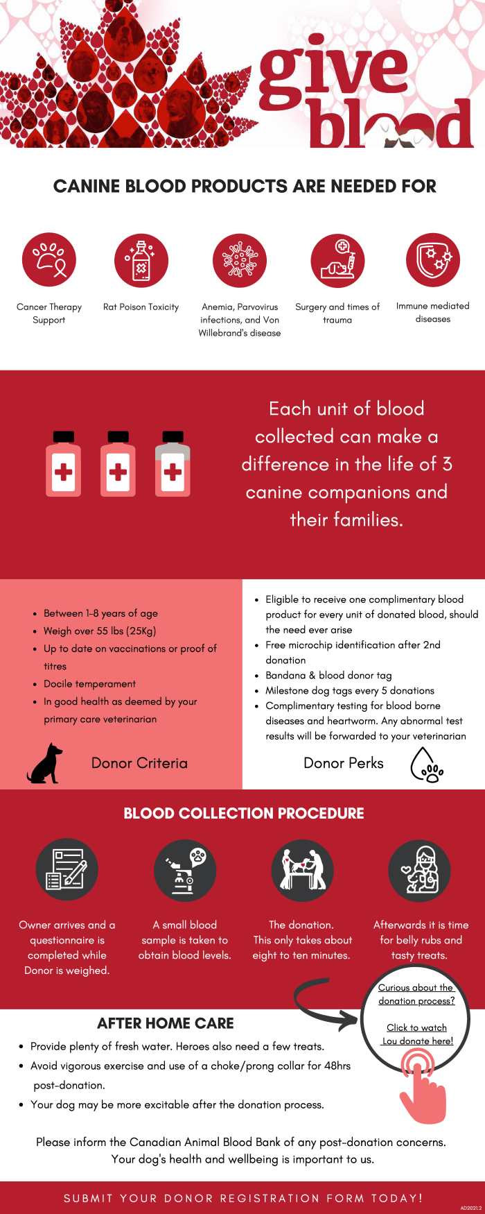 Canine blood donation Liberty Village Animal Hospital